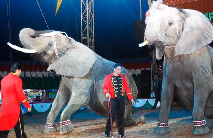 Corte Constitucional prohíbe el uso de animales silvestres en los circos