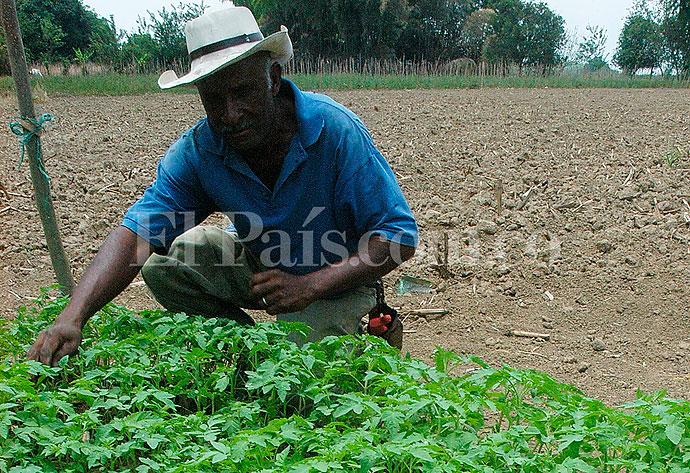 ¿Qué tanto se subsidia el agro colombiano?