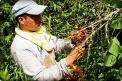 Presidente Santos reitera su compromiso con los cafeteros