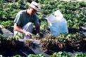 Gobierno adelanta detalles de reforma tributaria, insumos agrícolas no tendrán IVA