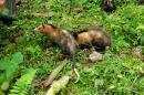 CVC liberó 42 animales silvestres en Buenaventura y Dagua