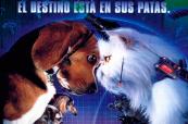 Cine en familia: Como perros y gatos
