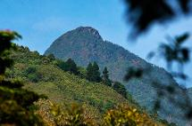 Fallo ordena proteger áreas de Parque Nacional Farallones de Cali