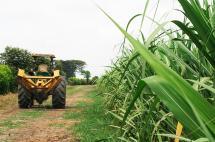 ¿Qué pasará con la industria azucarera ante millonaria sanción de la SIC?
