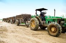 """""""Mecanismos de protección  al azúcar deben mantenerse"""": Procaña"""