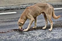 Denuncian envenenamiento masivo de mascotas en el sur de Cali