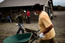 Cenizas del volcán Calbuco causan estragos en una de las zonas más productivas de Chile