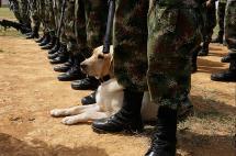 Condenan al Ejército por castigar a soldados con exceso de sentadillas
