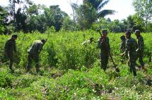 Informe de EE.UU. alerta sobre el aumento de cultivos ilícitos en Colombia