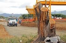 Personería, preocupada por tala de árboles en obras de terminal del MÍO