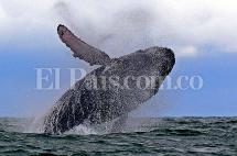 Conozca a Dayana Conrado la 'intérprete' de las ballenas