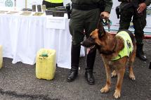 Rayo, el 'perro policía' que evitó un atentado en vías del Cauca
