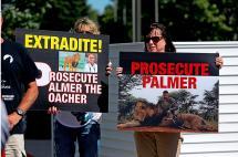 En imágenes: así protestan en Estados Unidos por la muerte del león Cecil