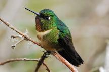 Conozca al biólogo caleño que descubrió el colibrí que ronca y el pájaro oruga
