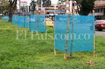 Árboles sembrados en Autopista serán reubicados para evitar deterioro durante la Feria