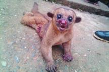 Denuncian indignante caso de maltrato animal en el Pacífico