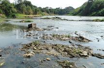 Al río Cauca también lo está secando la contaminación