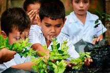 Viveros ecológicos, la iniciativa que le ha dado oxígeno al Valle del Cauca