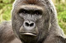 Seis accidentes en zoológicos que le dieron la vuelta al mundo