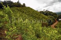 Un viaje al 'corazón de la coca' en el Cauca