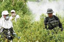 Tumaco, un pueblo invadido por la coca