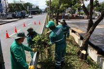 No autorizarán tala de árboles por eventos de la Feria de Cali