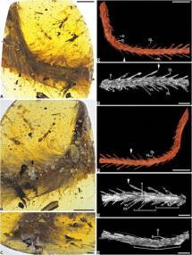 Científicos descubren cola de un dinosaurio con plumas que estaba conservada en ámbar