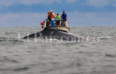 Video: comenzó la temporada de Ballenas en el Pacífico colombiano