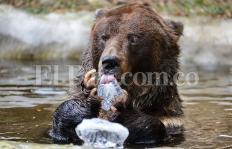 Imágenes: animales del Zoológico de Cali calman el calor con helados