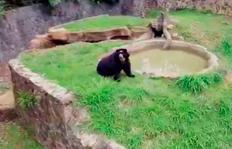 Cali desde el aire: tour por el Zoolo�gico de Cali, el lugar más mágico de la ciudad