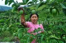 ¿Quiénes son los dueños de la tierra en el Cauca?