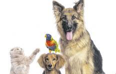 Descubra los beneficios de tener mascotas en la vejez