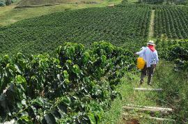 De acuerdo con los negociadores, el acuerdo sobre Desarrollo agrario, es el inicio de transformaciones radicales de la realidad agraria de Colombia. Foto: Elpaís.com.co   Archivo