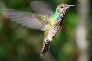 Algunas de las aves que usted puede observar en Cali