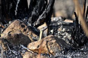 Imágenes: los cerros de Cali, tras los incendios