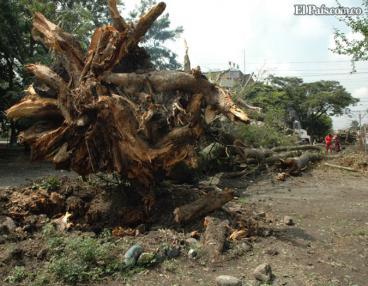 Entregan balance de los daños provocados por vendaval en Palmira