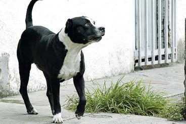 Autoridades advierten sobre la presencia de 63.000 perros de razas peligrosas en la ciudad