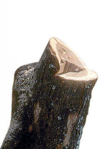 Cortar un árbol sin autorización ambiental puede salir costoso