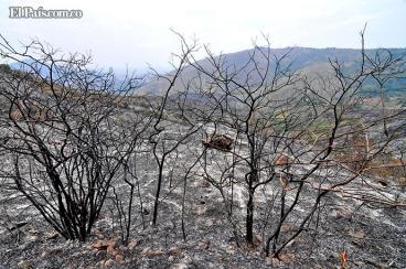 Imágenes: las consecuencias ambientales que han dejado los 700 incendios en Cali