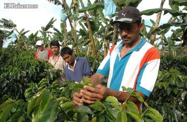 Gobierno entregará $28.800 millones al sector cafetero para aliviar crisis