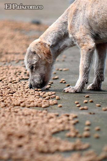Indignación entre vecinos de Brisas de los Álamos por envenenamiento de 22 mascotas