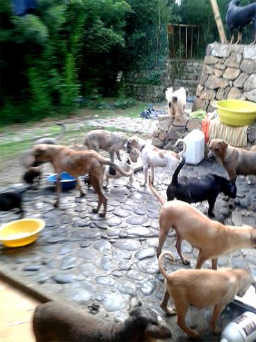 Albergue de animales en Cali a punto de ser desalojado por problemas con el lote que habitan