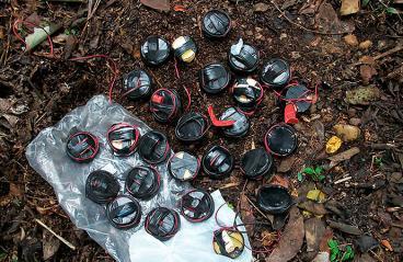 Durante el cese al fuego de Farc y ELN 35 menores fueron afectados por minas antipersonal