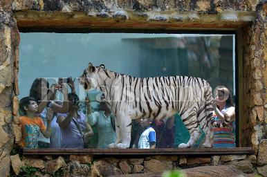 ¿Cómo acabó convertido el Zoológico de Cali en uno de los 5 mejores de América Latina?