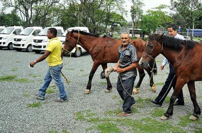 Video: 106 caballos ya se han 'jubilado' de las carretillas en Cali