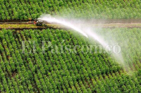 Modificarán rebaja en aranceles para el azúcar importada