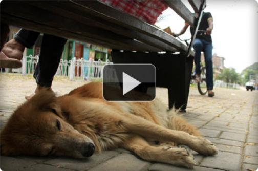 Tras los pasos de un drama animal que se vive en Puerto Tejada