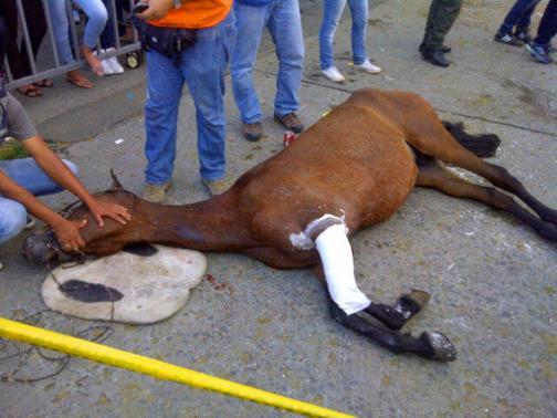 Denuncian muerte de un equino y maltrato a otros en Cabalgata de la 55 Feria de Cali - elpais.com.co