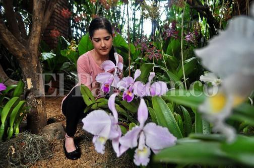 Imágenes: 5 mil especies de orquídeas podrán ser apreciadas esta semana en Cali