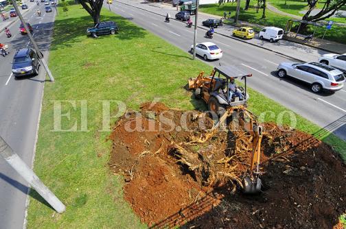 Comienza recuperación de zonas verdes afectadas por graderías de Feria de Cali